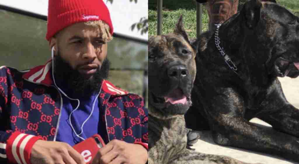 best sneakers 03407 cc71b You Can Adopt 1 of Odell Beckham's Puppies - The Journal ...