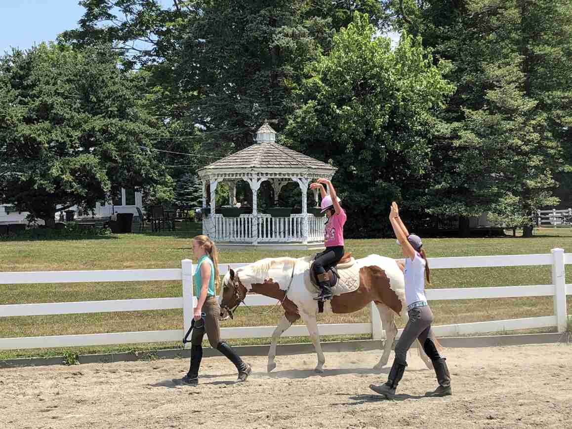 Copper Hill Colts Neck Horse Equestrian