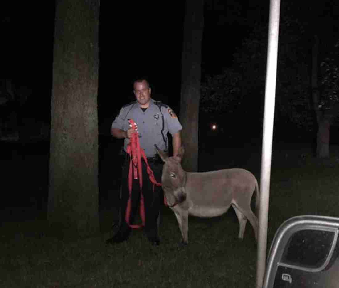 Holmdel Donkey escapes june 18 2019