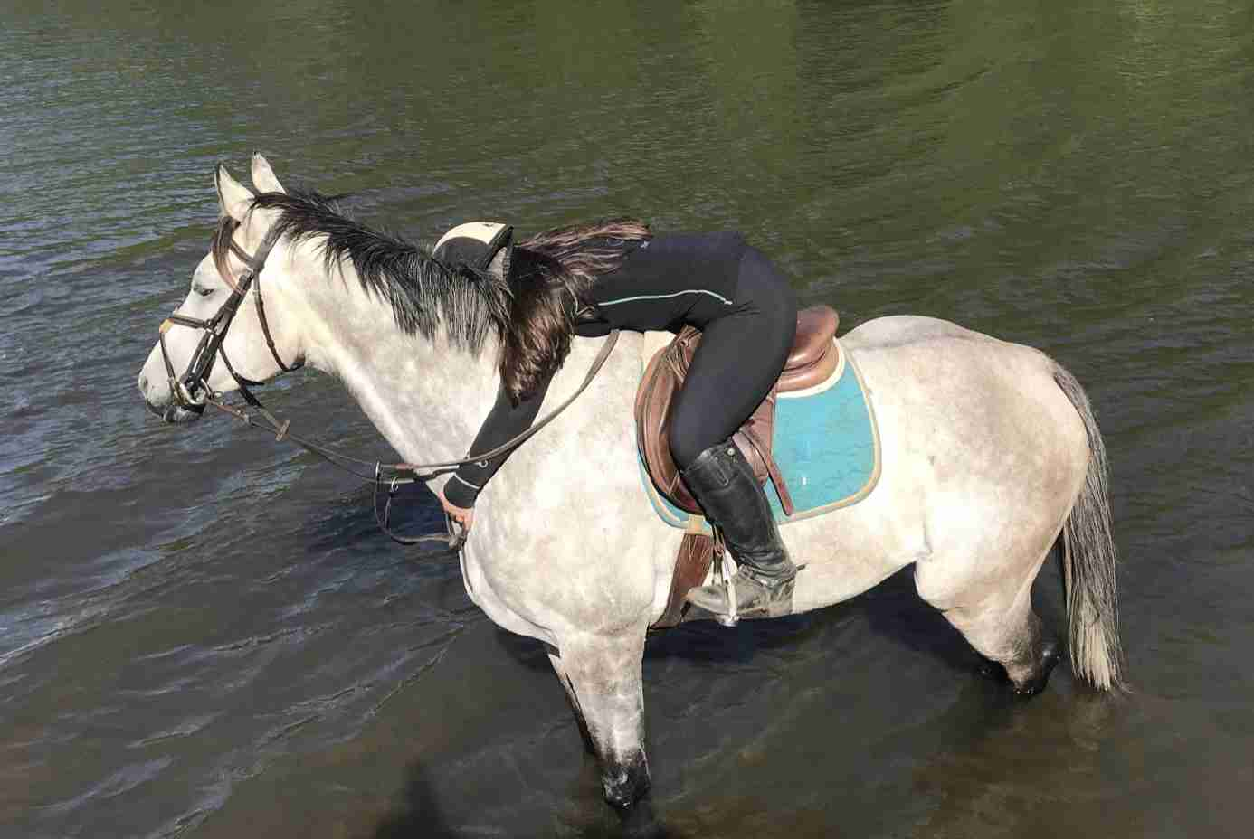 Olive Scaff horse 4h monmouth county nj
