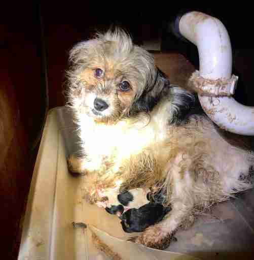 Monmouth County Spca Rescues More Than 60 Neglected Dogs In Middletown The Journal Publications